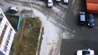 Смотреть онлайн Водитель задавил собаку, которая лежала во дворе