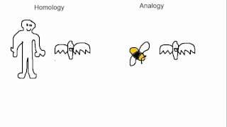 Biology Analogy vs Homology