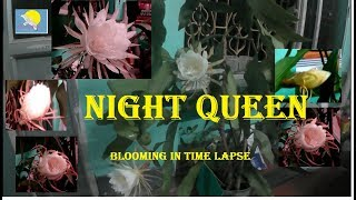 How  Night Queen Blooms - In Time Lapse Mode