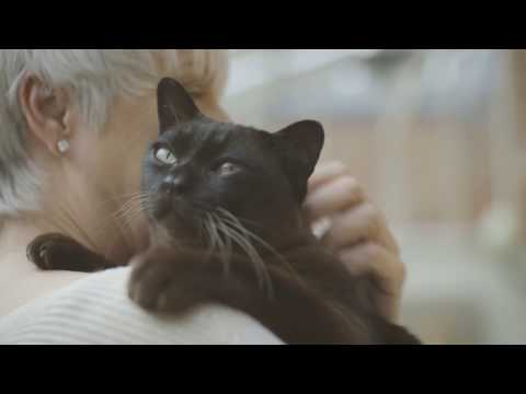 A la rencontre de Bouncer, chat senior : son alimentation - Pro Plan chez Truffaut