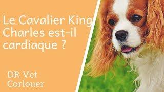 Le Cavalier King Charles Est-il Cardiaque ?