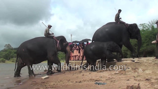Elephant training Camp in South India : Sakrebailu
