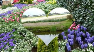 Голландия: королевский парк цветов Кёкенхоф. Часть 1-продолжение следует