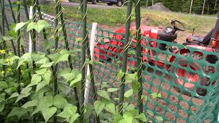 Ontario Gardening Log - S01E11 - Which plants worked and which didn't