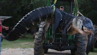 Самое интересное про крокодилов. #самыйбольшойкрокодил