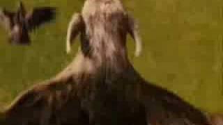 Gryphon (Narnia) - My Little Phoenix