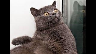 Si te ries pierdes! Intenta ver este videos de gatos sin morirte de risa!!