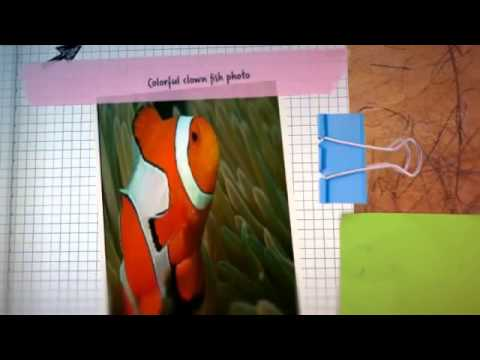 Video of Fish Puzzle