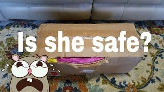 BOX OPENING OF SURPRISE BABY! DAMAGED BOX! FULL BODY SILICONE BABY GIRL! AMAZING GIFT OPENING!