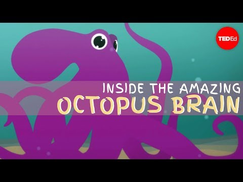Take a Dive inside the Amazing Brain of the Octopus