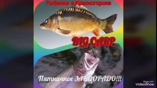 Платная рыбалка в подмосковье красногорская плотина