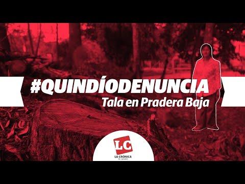 Afectación ambiental y social, el resultado de tala en Pradera Baja