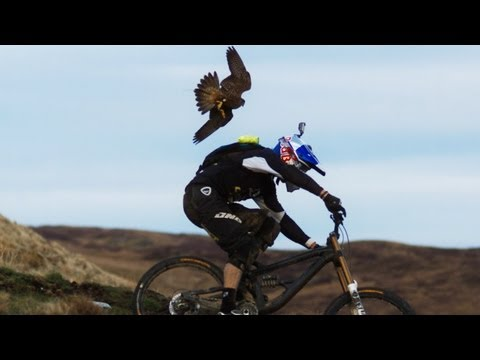 Mountain Biker chased by a Falcon
