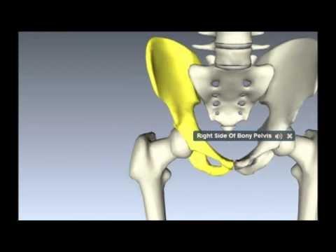 Anatomía de la estructura de articulación del hombro
