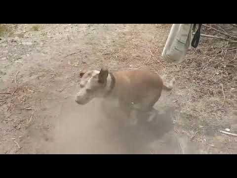 Cane si rotola nella cenere!!!