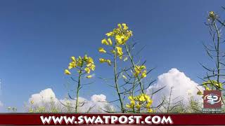 Flowers Of Swat