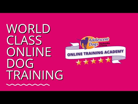 Online Dog Training Academy - FREE TRIAL
