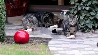 Katze Mimi - Fütterung der Streuner