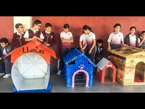 Mexican Children Built Houses for Street Dogs Using Recycled Materials and We're in