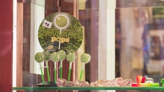 The booming business of cannabis in Spain