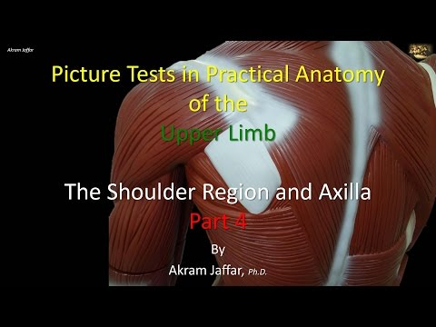 Picture tests in anatomy shoulder region and axilla 4