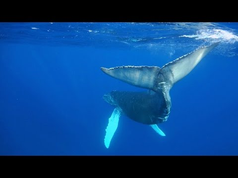 Best diving in Mexico – Socorro Island and Isla Mujeres, underwater footage with RX100 and LX100