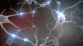 1. Experiences Build Brain Architecture