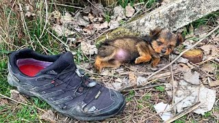 The Sneaker Was What This Abandoned Puppy Used As A Bed. Until He Was Rescued By This Guy