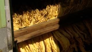 Verschwundene Nutzpflanze: Tabakanbau im Kammersteiner Land   Zwischen Spessart und Karwendel   BR