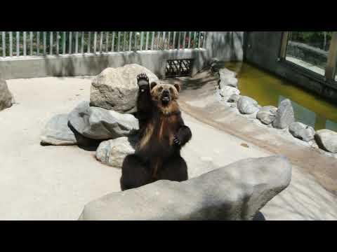 인사하는-곰-다시보기