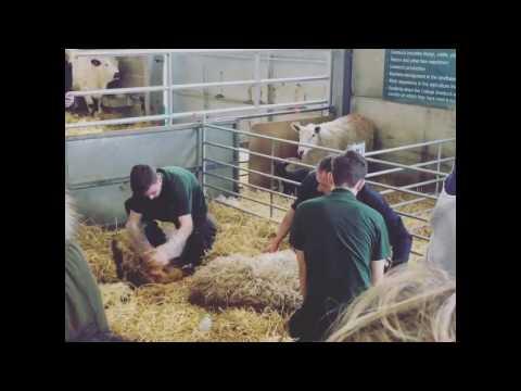 Lambing Weekend 2017