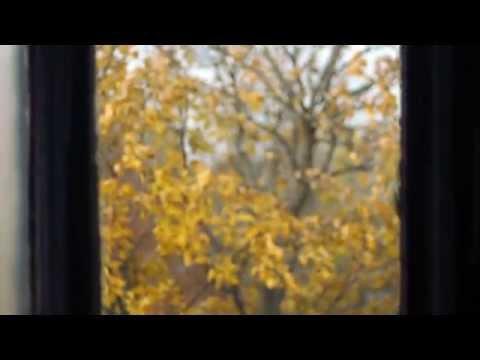 SPARROW - Audra Kubat - Official Music Video
