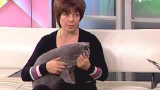 Смотреть онлайн Советы специалиста: как приучить котенка к лотку