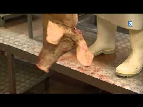 Les gouttes des parasites bactefort baktefort