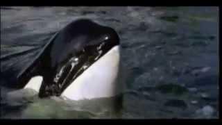 RAHAN - DEEP BLUE SEA (vidéo clip)