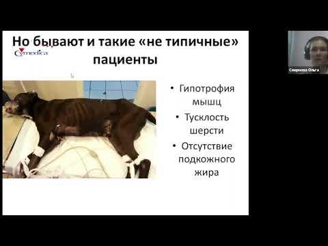 Гиперадренокортицизм или Синдром Кушинга у собак - часть 1