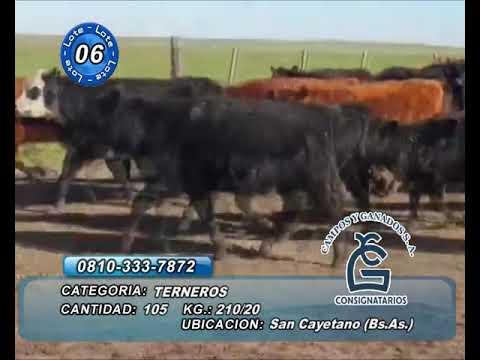 Lote MACHOS - San Cayetano Bs As
