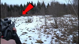 Охота на лося, лоси вышли на мой номер! Moose hunting!