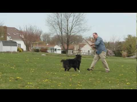 How to Choose the Best Electric Dog Fence Brand | Havahart® Wireless
