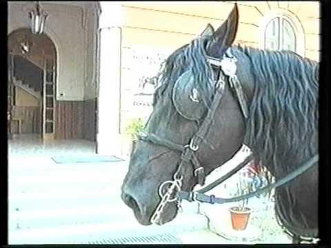 Lattivatore di cavallo per uomini per comprare SPb