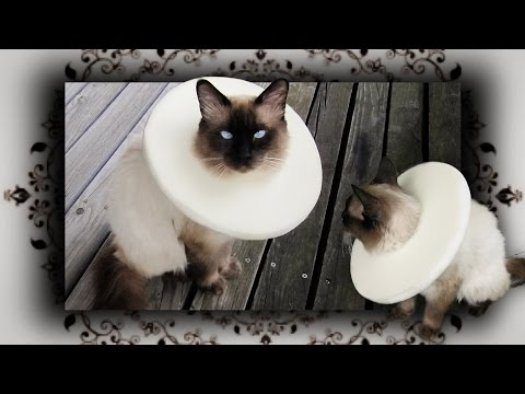 DIY 😻 Halskrause Leckschutz Kragen für Katzen & Hunde | Comfy Vet E Collar