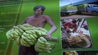 Reportage - Banane et canne à sucre origine DOM
