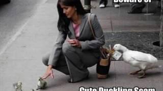 Top 10 Funniest Photos Video