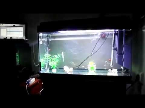 Brico Pantalla de LED para acuario con efecto Amanecer, Anochecer ,, Automatic dusk down simulation