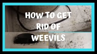 HOW TO GET RID OF Weevil  Infestions | How to Get Rid of Bugs
