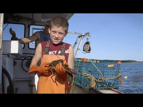 Youtube Video Still for Harvesting American Lobster - The Basics