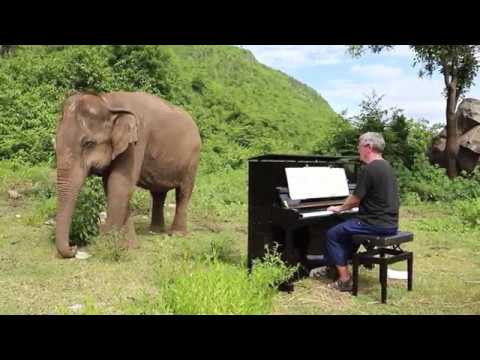 Man plays the piano for blind elephant