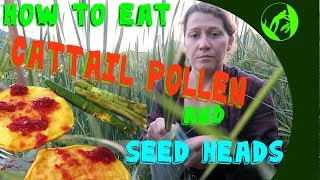 How to Cook Cattail Pollen Pancakes and Seed Heads