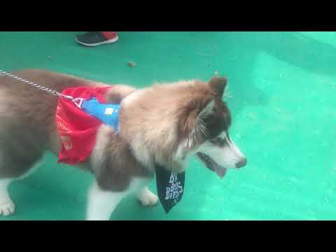 Event Highlights Pet Fed Bengaluru (Part 2)