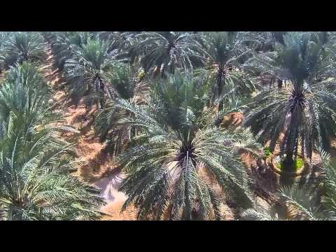 Where do dates come from in Perth